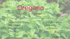 Oregano, natuurlijke anti biotica